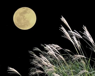 お月見すすき